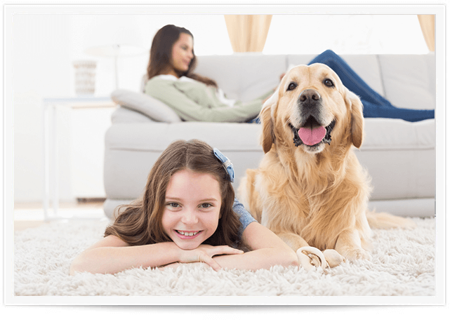 Pet Urine Removal Service in Beaver